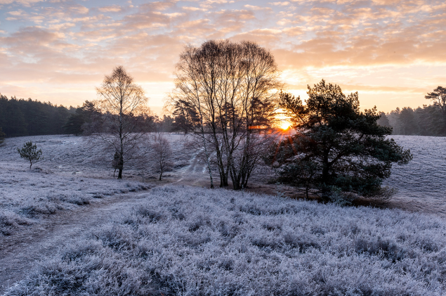 Winter in der Misselhorner Heide
